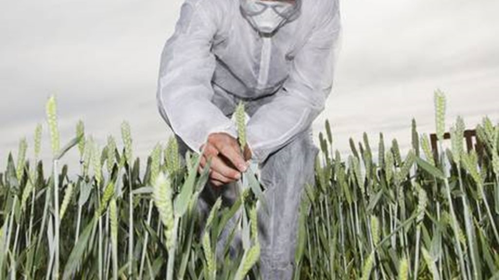 Scientist in a wheat field - Lundy Lundy Soileau & South - Glyphosate Cancer Attorneys - Louisiana